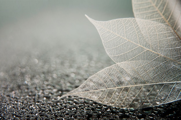 Скелет листья на черном фоне абстрактный мокрой. художественное макро фото с пространством для текста.