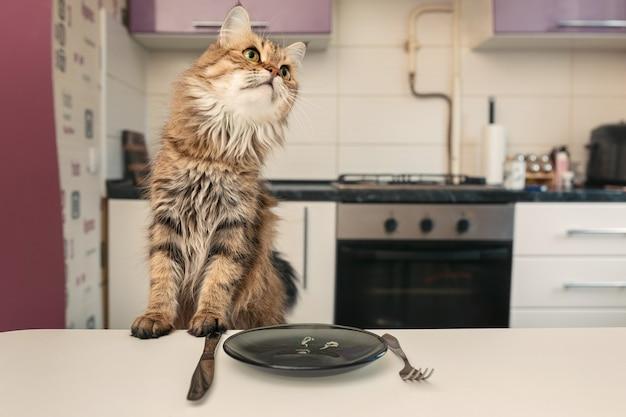 食べ物を待っているテーブルの猫。猫はノルウェージャンフォレストを繁殖させます。猫は目をそらします。