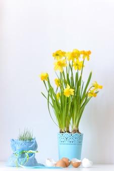 Пасхальные цветы нарцисса в вазоне и яичной скорлупы