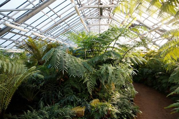 Тропическая оранжерея / теплица с вечнозелеными растениями, папоротники в солнечный день