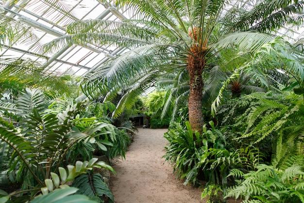 Тропическая оранжерея / теплица с вечнозелеными растениями, экзотическими пальмами, папоротниками
