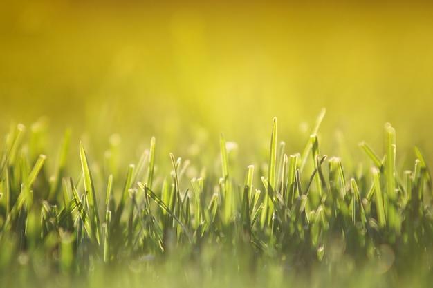 緑の芝生や夕暮れ時のフィールドに新鮮な刈り取り草のクローズアップ