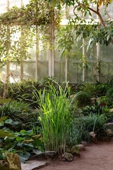Взгляд собрания заводов тропического болота в парнике / парнике. солнечный лучик.