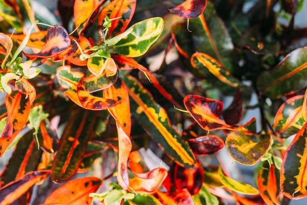 Крупным планом растений в горшках в теплице