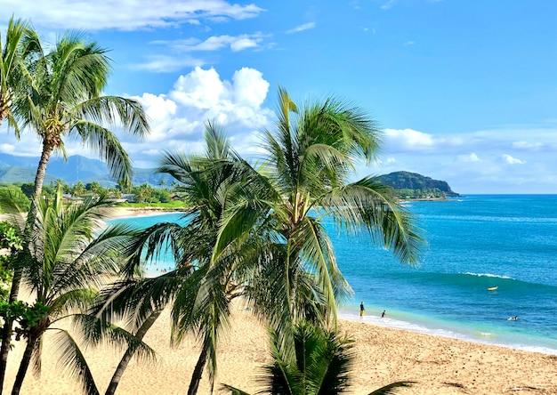オアフ島ハワイの風景。