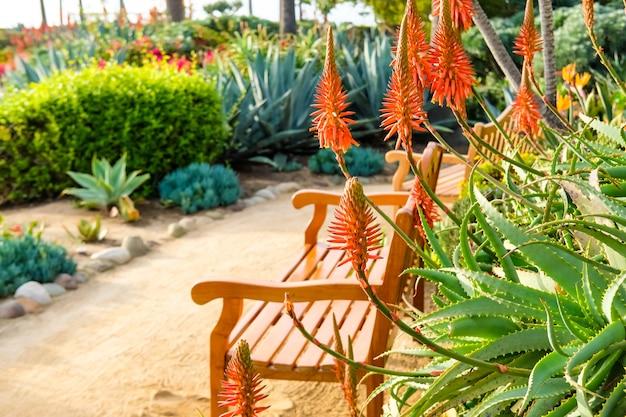 美しいアロエのサンゴの花とカリフォルニアのラグーナビーチ公園の木製ベンチ。