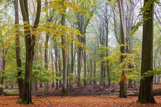 Туманный осенний лиственный лес в сумерках