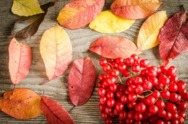 秋の葉と果実の背景