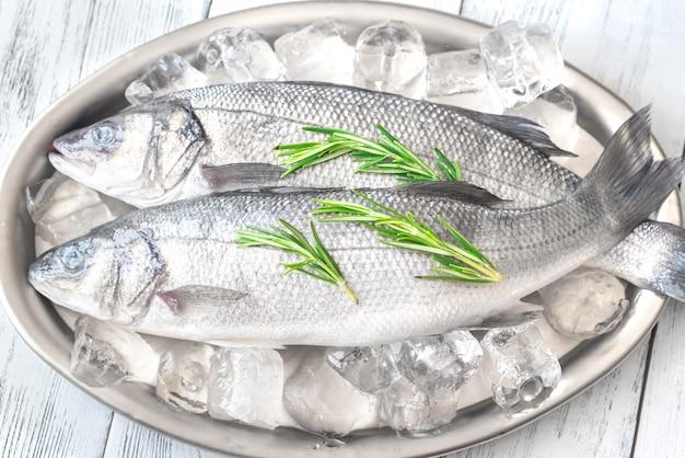 新鮮なスズキの魚