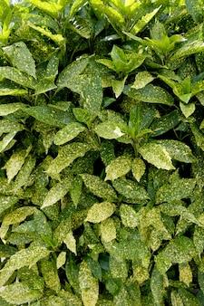 緑と黄色の葉のテクスチャです。葉のテクスチャ背景