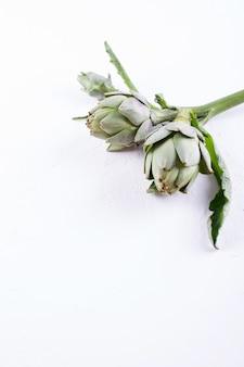 Свежий сырцовый органический цветок артишока на белой предпосылке.