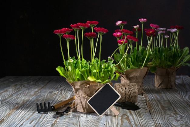 Весенний сад работает концепция. садовые инструменты, цветы в горшках и лейки на темный деревянный стол.