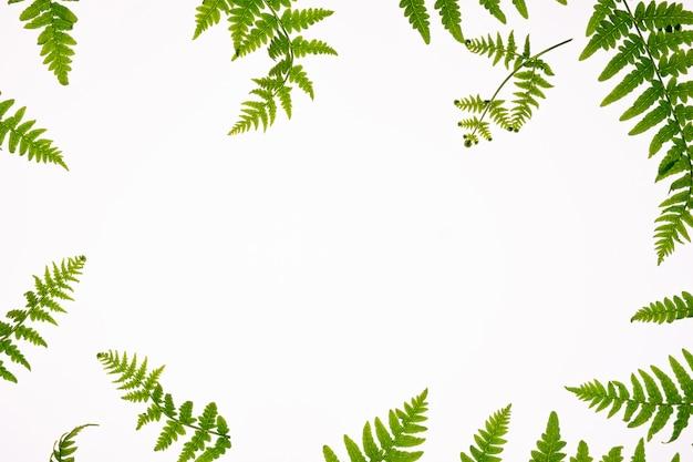 中心にコピースペースを持つ花の組成物。白い背景、アロマセラピー、緑の自然化粧品のコンセプトにシダの緑の葉。フラット横たわっていた、トップビュー。