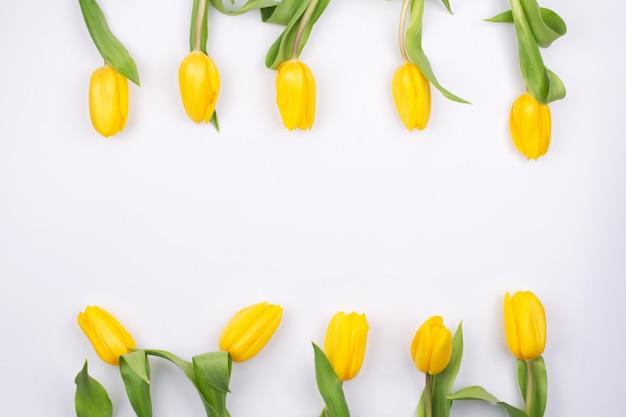 ホリデーグリーティングカード。白い背景の上の黄色のチューリップの花の境界線。チューリップと春の背景、コピースペース。フラット横たわっていた、トップビュー。