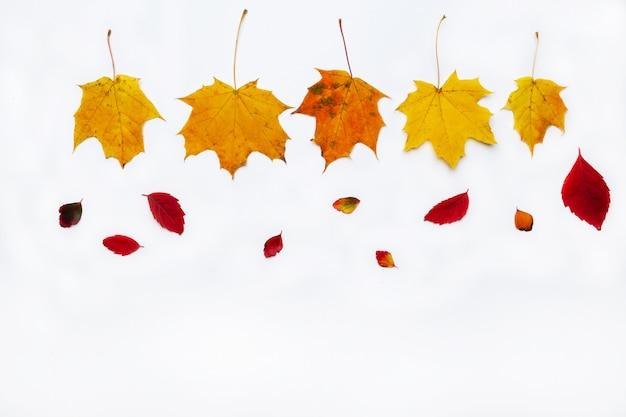 白い背景の秋の葉で作られた秋の境界線。フラット横たわっていた、トップビュー。季節限定のプロモーションや割引のためのスペースをコピーします。