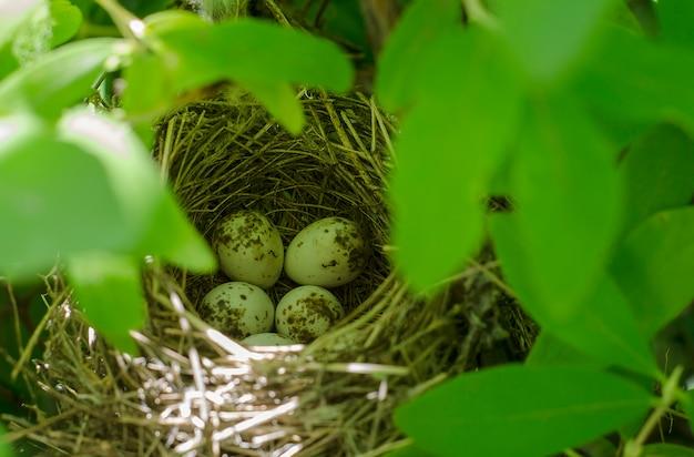 Птичье гнездо с пятнистыми яйцами в кустах.