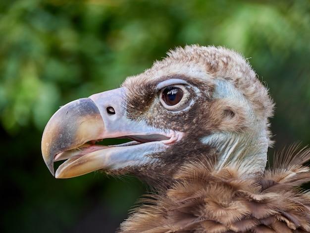 Гриф портрет птица макро макро зоопарк деревья