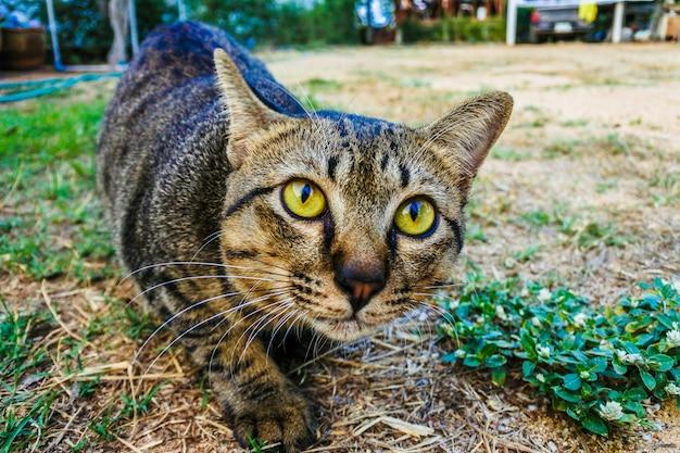 ポートレート猫