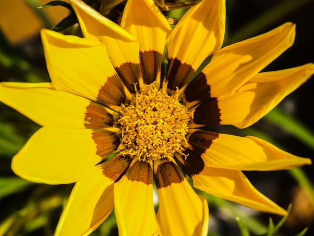 花の画像の背景