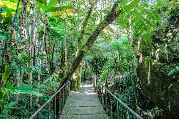 Ландшафтный сад, лесной стиль