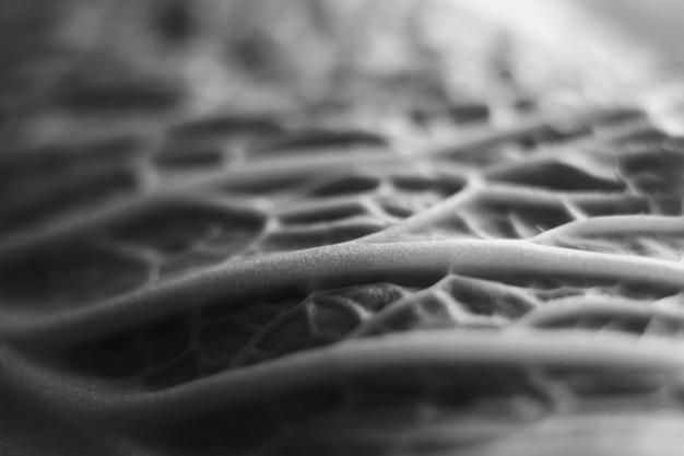 Пекинская капуста. вены листа. текстура растения.