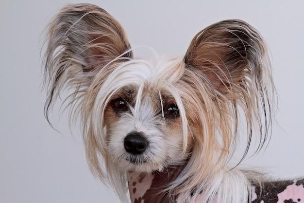 純血種の犬の肖像画