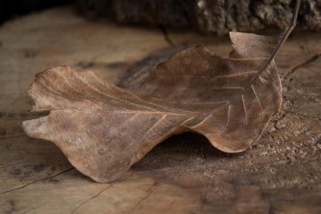 Сухой осенний лист грецкого ореха на пне
