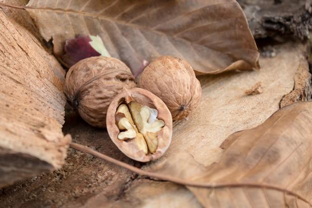 Спелые грецкие орехи и сухие листья на пне