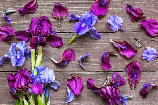 アイリスの花と花びらで作られたクリエイティブなレイアウト