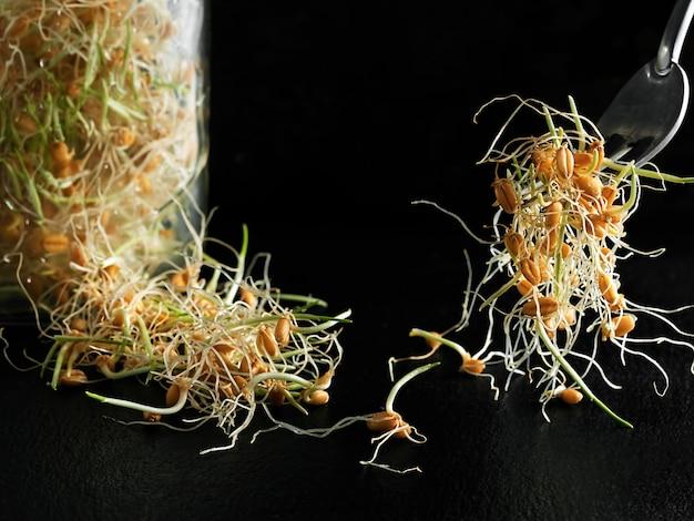 Проросшие семена пшеницы в стеклянной банке на темном фоне