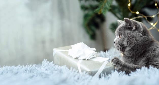 Серый британский кот с рождественскими подарками на тему праздника