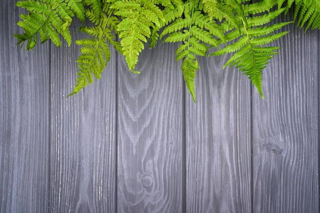 Листья зеленого папоротника на фоне коричневого дуба с копией пространства