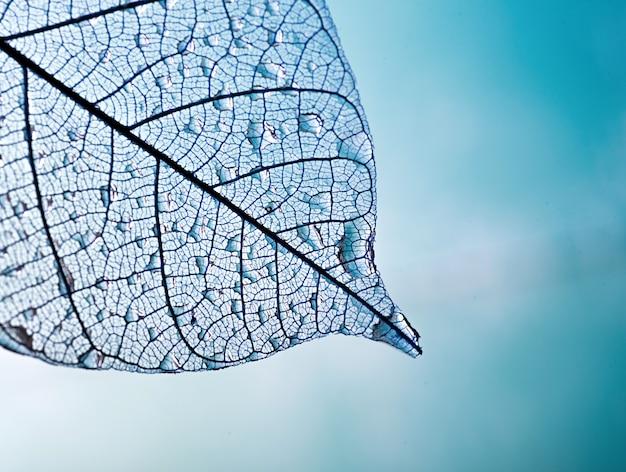 Скелет листья на фоне размыли, крупным планом