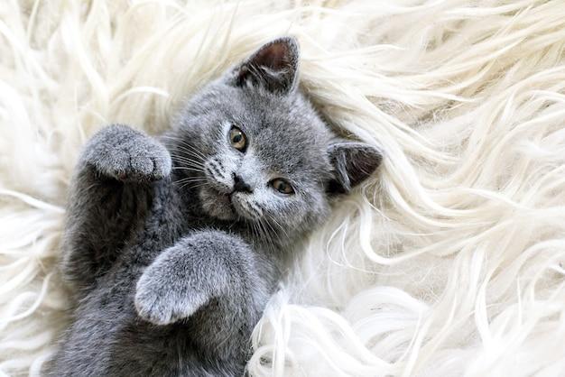 子猫は毛皮で寝る