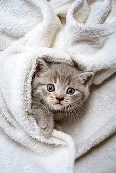 白い格子縞の上に横たわるかわいい子猫イギリス