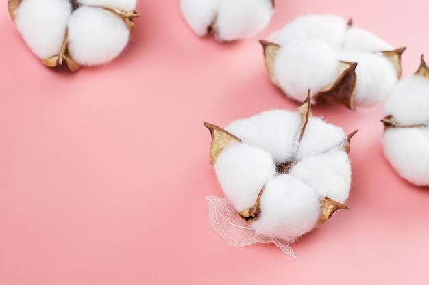綿植物の花がピンクにクローズアップ