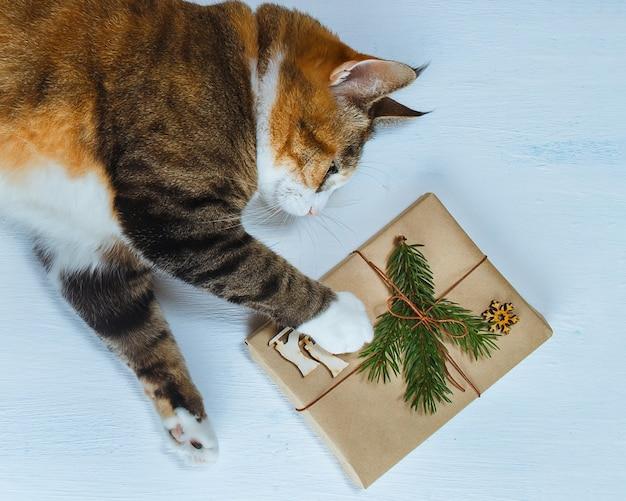 Кот хочет открыть рождественский подарок