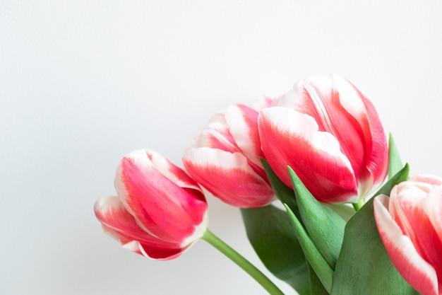 コピースペースとピンクのチューリップの花束。休日のバナー、ポストカード、ギフトカードの美しい花の壁