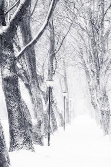 雪の降る路地