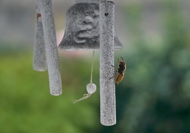 Азиатская оса на колокол в саду