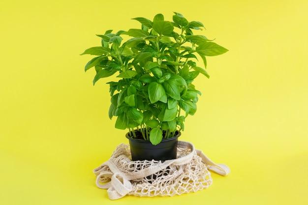 黄色のストリングバッグ付きのブラックポットの新鮮なグリーンバジルプラント。廃棄物ゼロと家庭菜園のコンセプト