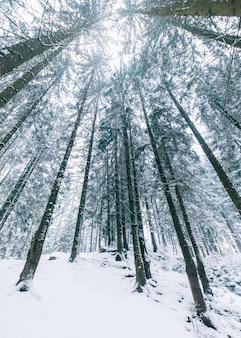 山の樹冠。冬の山