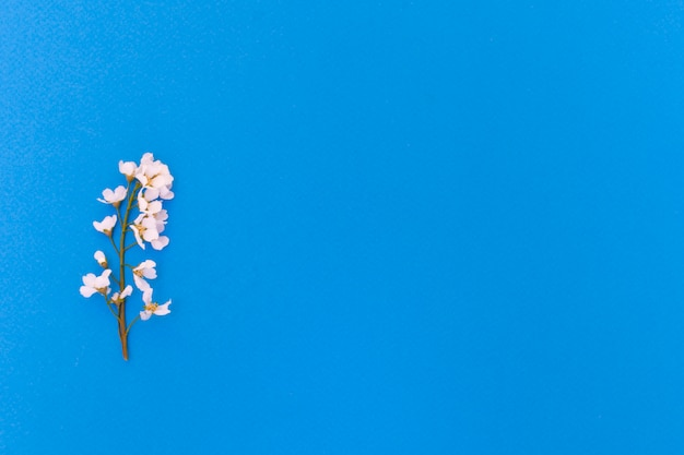 花と青い背景に鳥チェリーの葉。