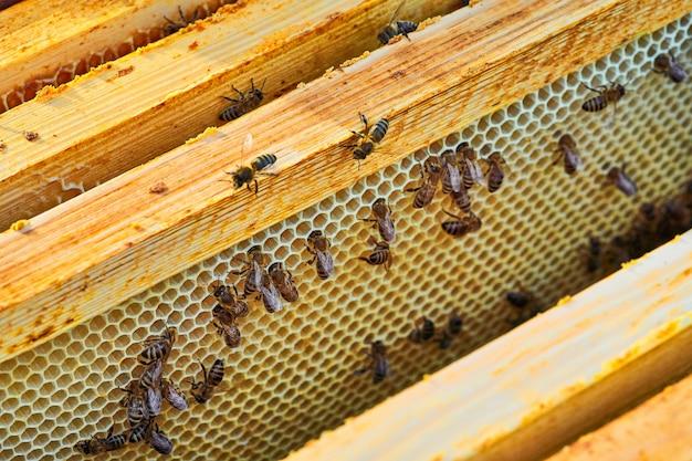甘い蜂蜜とハニカムの働き蜂のビューを閉じます。ハチミツは、健康に良い養蜂です。