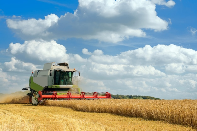 Зеленый красный рабочий комбайн в поле пшеницы
