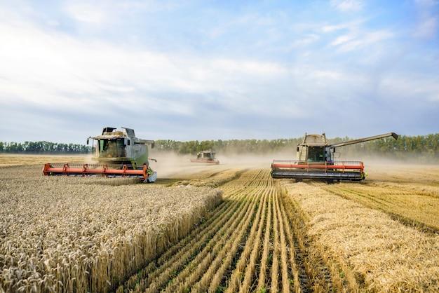 Зерноуборочный комбайн собирает спелую золотую пшеницу на поле.