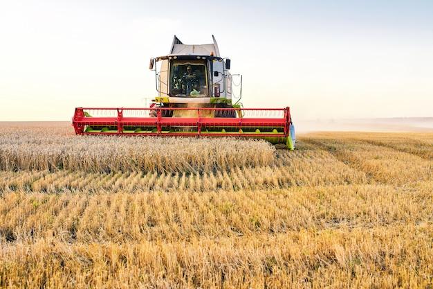 Зерноуборочный комбайн собирает спелую пшеницу.