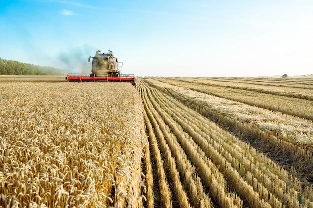 コンバインハーベスターは熟した小麦を収穫します。豊かな収穫の概念。農業イメージ