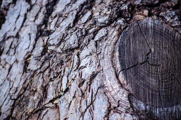 Текстура коры дерева