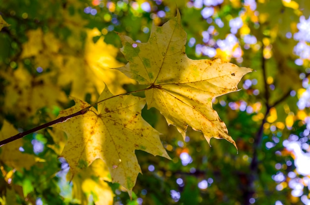 木の上の黄色の葉